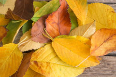 Pila de hojas de otoño coloridas caidas como fondo Imagen de archivo
