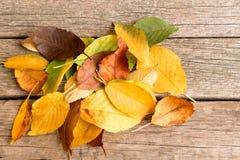 Pila de hojas de otoño coloridas caidas en el fondo de madera Fotos de archivo libres de regalías