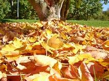 Pila de hojas secas debajo del árbol fotografía de archivo libre de regalías