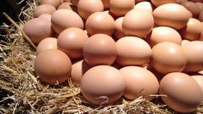 Pila de huevos frescos Imagen de archivo libre de regalías