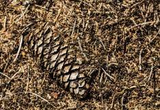 Pila de la hormiga con una picea Imagenes de archivo