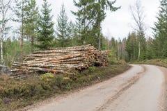 Pila de la madera para pasta papelera del abedul por el borde de la carretera Fotos de archivo