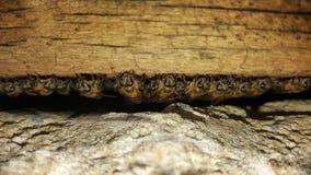 Pila de la primera fila del primer de abejas entre la madera y el hormigón en ho Foto de archivo
