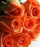Pila de las rosas coralinas Fotos de archivo