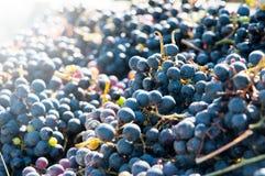 Pila de las uvas rojas Imagenes de archivo