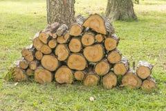 Leña del pino foto de archivo libre de regalías
