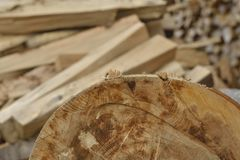 Pila de leña seca Imágenes de archivo libres de regalías