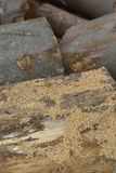 Pila de leña seca Imagen de archivo