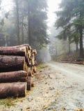 Pila de madera de construcción en bosque del pino Imagen de archivo libre de regalías