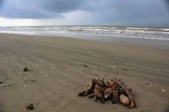 Pila de madera de deriva Foto de archivo