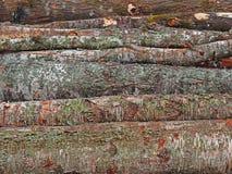 Pila de madera de la madera, fondo de madera del registro de la madera de construcción Foto de archivo