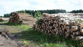Pila de madera de los registros del combustible metrajes