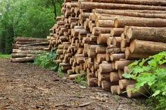 Pila de madera del pino aserrado y registros Spruce para la industria de la silvicultura Imágenes de archivo libres de regalías