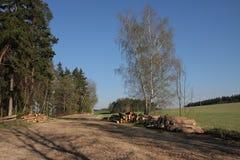 Pila de madera en bosque Imágenes de archivo libres de regalías