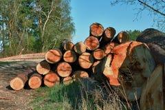 Pila de madera en bosque Fotos de archivo