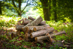 Pila de madera en el bosque Fotografía de archivo libre de regalías