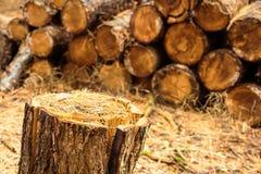 Pila de madera en foco suave en fondo con delantera de la clave que parte imagenes de archivo
