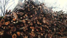 Pila de madera en la lluvia almacen de video