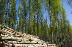 Pila de madera en la primavera Fotografía de archivo