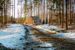Pila de madera para pasta papelera por un camino forestal en primavera Imagenes de archivo