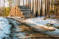 Pila de madera para pasta papelera por un camino forestal en primavera Foto de archivo