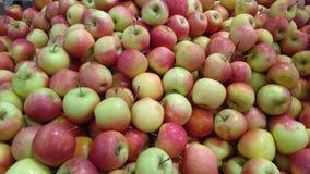 Pila de manzanas Foto de archivo libre de regalías