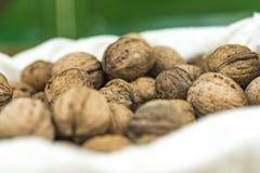 Pila de nueces frescas enteras en sus cáscaras Imágenes de archivo libres de regalías