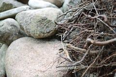 Pila de piedras, de rocas y de raíces Imágenes de archivo libres de regalías