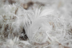 Pila de plumas Foto de archivo