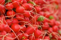 Pila de rábanos rojos Imagenes de archivo