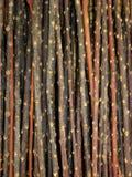 Pila de ramificaciones Imagen de archivo