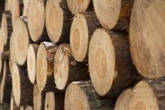 Pila de registros de la madera de pino Fotografía de archivo