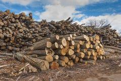 Pila de registros de madera Foto de archivo libre de regalías