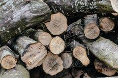 Pila de registros de madera listos para el invierno Fotos de archivo