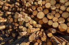Pila de registros del árbol de pino Foto de archivo