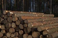 Pila de registros del pino Imagen de archivo libre de regalías