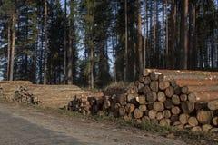 Pila de registros del pino en el camino Fotografía de archivo