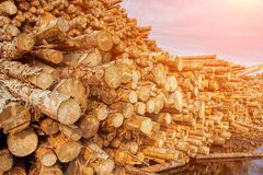 Pila de registros de madera Diversos formatos del árbol imagenes de archivo