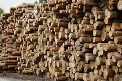 Pila de registros de madera Sitio de registración del bosque Troncos de árbol derribados Imagen de archivo libre de regalías