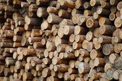 Pila de registros de madera Sitio de registración del bosque Troncos de árbol derribados Imagenes de archivo