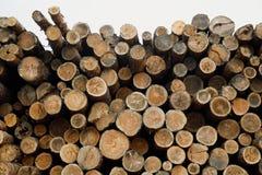 Pila de registros de madera Sitio de registración del bosque Troncos de árbol derribados Fotografía de archivo