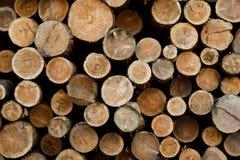 Pila de registros de madera Sitio de registración del bosque Troncos de árbol derribados Fotos de archivo libres de regalías
