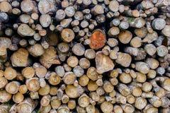 Pila de registros para el fondo de madera de la textura Foto de archivo