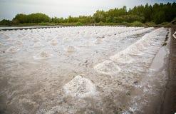 pila de sal cruda en el campo de la sal sale la agricultura antes de proceso de la saturación del ssalt en fábrica fotos de archivo libres de regalías