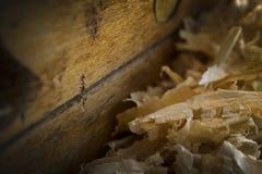 Pila de serrín y pedazo de madera Imagen de archivo libre de regalías