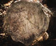 Pila de tocón de árbol para el fondo Foto de archivo