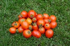 Pila de tomates maduros rojos y anaranjados Fotos de archivo libres de regalías