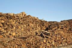 Pila de troncos de árbol tajados de eucalipto imagenes de archivo