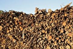 Pila de troncos de árbol tajados de eucalipto fotos de archivo libres de regalías