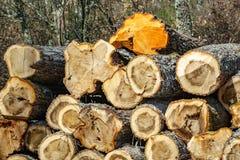 Pila de troncos Foto de archivo
